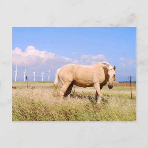 Palomino Horse With Windmills Postcard postcard