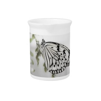 Paperwhite Butterfly Pitcher