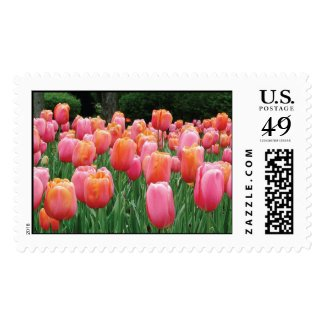 Peach and Pink Tulips Stamp