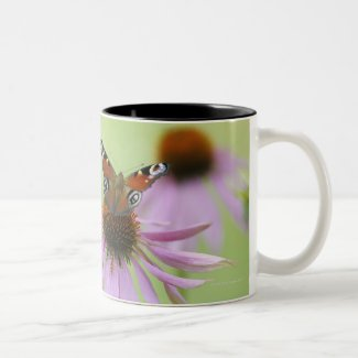 Peacock butterfly (Inachis io) drinking nectar Mug