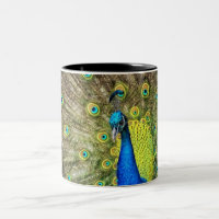 Peacock Color Beauty Two-Tone Coffee Mug