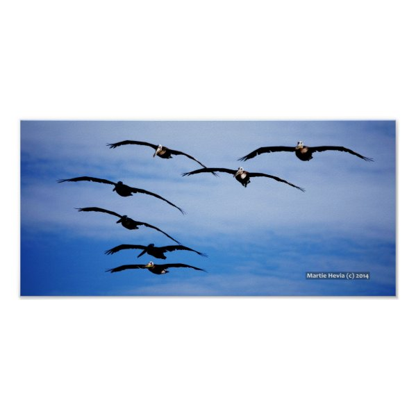 Pelican Cluster IV Print