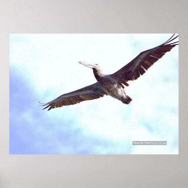 Pelican Soars Print Poster