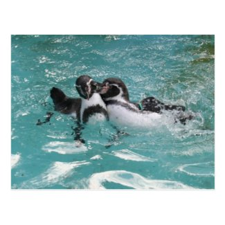 Penguins playing in the Water Postcard