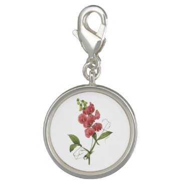 perennial sweet pea by Redouté Charm