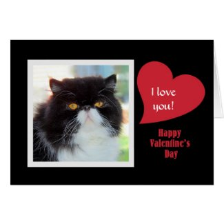 Persian Cat I Love You Valentine Greeting Card