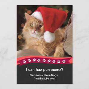 Photo Holiday Greeting Card Lol Cat