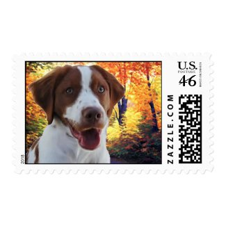 Pie The Brittany Postage stamp