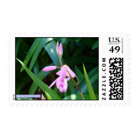 Pink Against Green Postage
