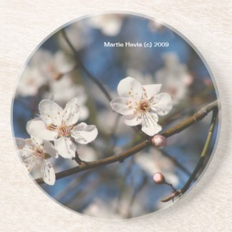 Pink Cherry Blossoms - Coaster coaster