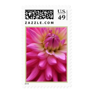 Pink Dahlia Flower Postage Stamps