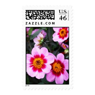 Pink dahlia flowers stamps