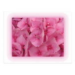 Pink Hydrangea postcards