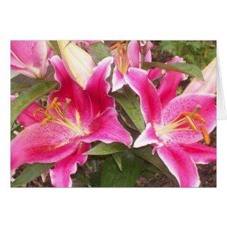 Pink Lilies Card card