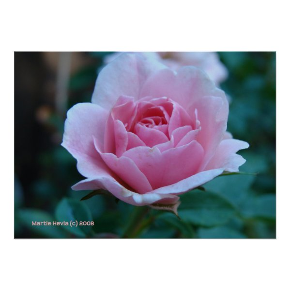 Pink Rose in Green Print