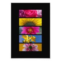 Pink & Yellow Macro Flowers photoenlargement