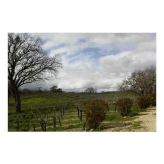 Poster:Zenaida Vineyards, Paso Robles, CA print