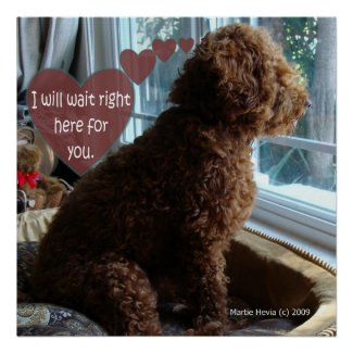 Proud Poodle - Missing You - Poster