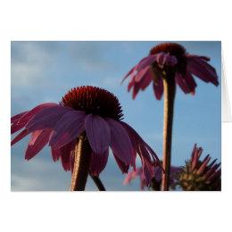 Purple Coneflower & Sky Card