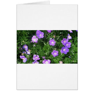 Purple Cosmos Greeting Card