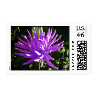 Purple dahlia postage stamp