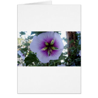 Purple Hibiscus at Pelican Cove Cards