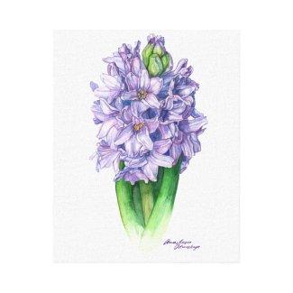 Purple hyacinth canvas print