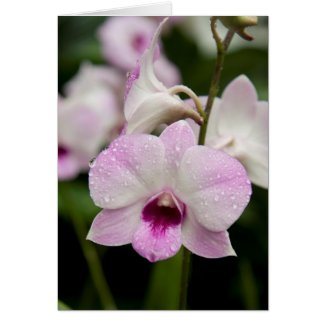 Purple Orchid Blank Card