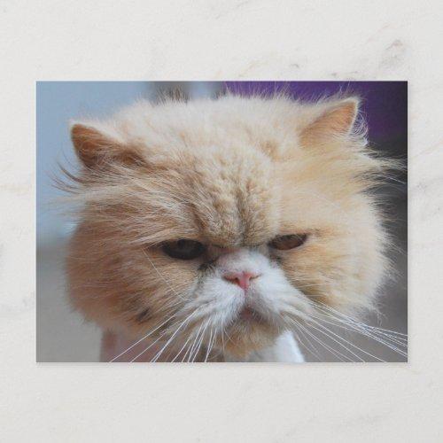 Purr-fect Persian Cat Postcard postcard