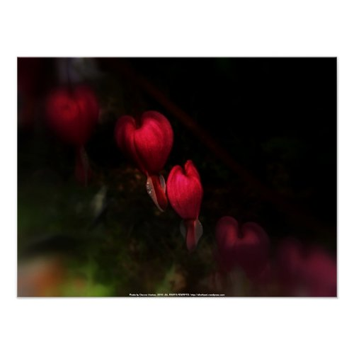 red bleeding hearts #8 dark print