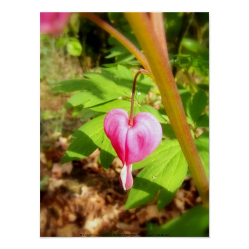 red bleeding hearts #9 print