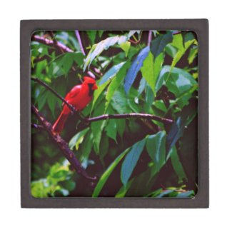 Red Cardinal Premium Trinket Box