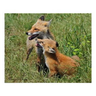 Red Fox Mama and Kit print