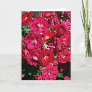 Red Rose Bush Card card