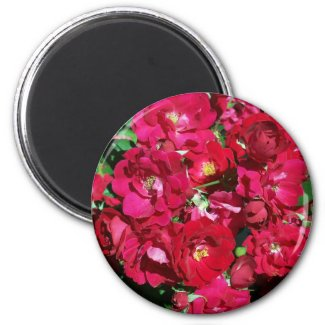 Red Rose Bush Magnet magnet