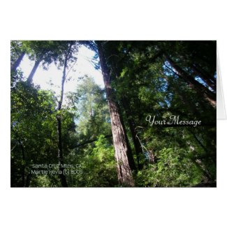 Redwoods - Card card
