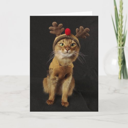 Reindeer Games Somali Cat Holiday
