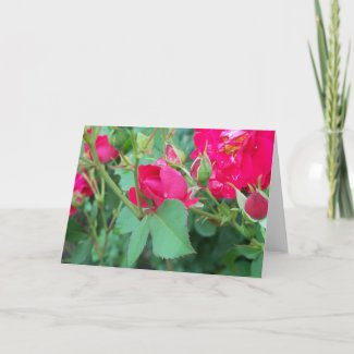 Rose Bud with Water Droplet Card card