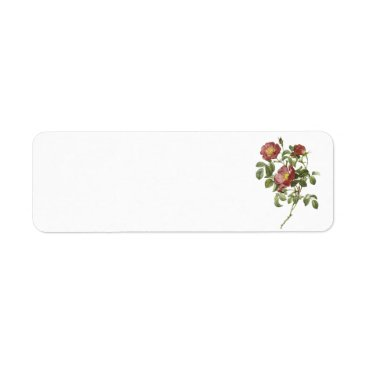 rose of love (Rosa pumila) by Redouté Label