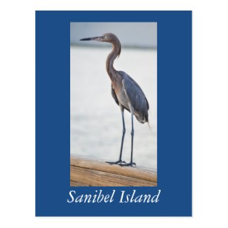 Sanibel Birding postcard
