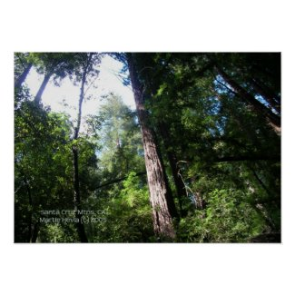 Santa Cruz Redwoods Print - Select Your Frame print