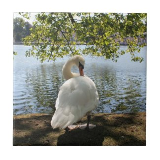 Schloss Benrath - Swan by the Pond Ceramic Tile