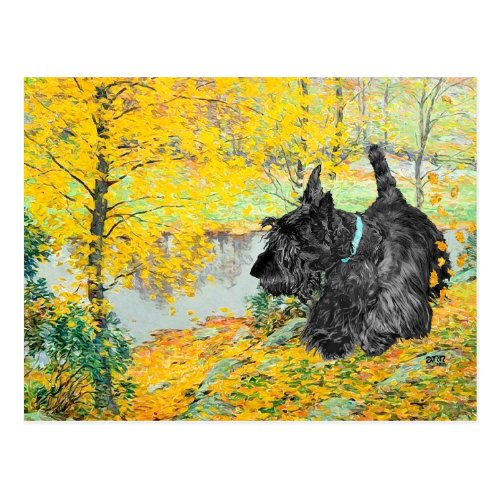 Scottish Terrier Post Card