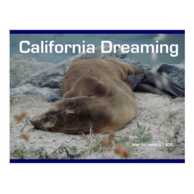 Sea Lion - California Dreaming - Postcard