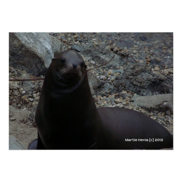 Sea Lion Close-Up zazzle_print
