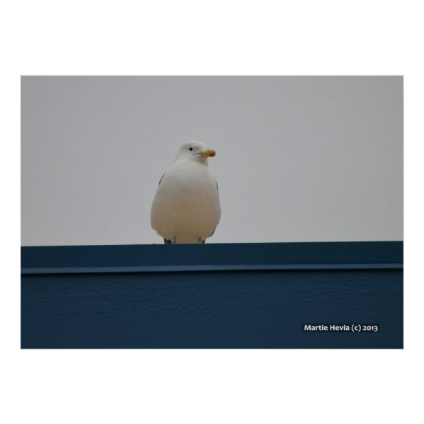 Seagull on a Blue Roof II