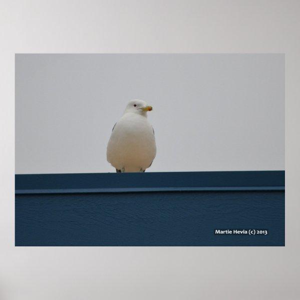 Seagull on a Blue Roof II Print