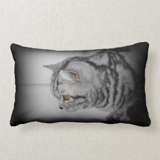 Silver tabby cat pillow