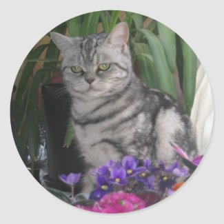 Silver tabby - cat sticker sticker