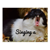 Singing Guinea Pig Postcard